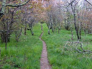 Spence Field - The Appalachian Trail crossing Spence Field, looking east.