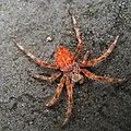 Spider (94645323).jpeg