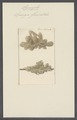 Spongia fluviatilis - - Print - Iconographia Zoologica - Special Collections University of Amsterdam - UBAINV0274 112 05 0004.tif