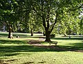 St Andrews' Park - geograph.org.uk - 198031.jpg