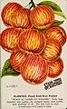 Stark fruits (1896) (20518217336).jpg