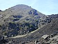 Starr-031001-0100-Artemisia mauiensis-habit-Puu Kumu HNP-Maui (24045512903).jpg