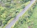 Starr-141014-2255-Caesalpinia decapetala-aerial view Hana Hwy-Kakipi Gulch Haiku-Maui (25247329295).jpg