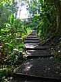 Starr 050107-2829 Heliconia humilis.jpg