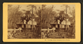 Steaming down Oklawaha River, Florida, from Robert N. Dennis collection of stereoscopic views.png