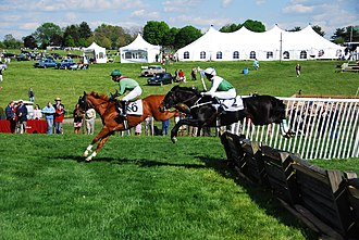 Bascule (horse) - These steeplechasers jump flat, without bascule, to save time and energy.