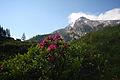 Steirischekalkspitze0162.JPG