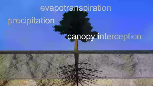 FileStormwater Management with trees.webm & Canopy interception - Wikipedia