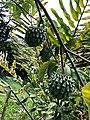 Strange Fruit (45808349744).jpg