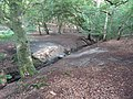 Stream in Birch Wood - geograph.org.uk - 2499263.jpg