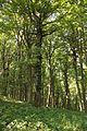Strogi prirodni rezervat Veliki Sturac, planina Rudnik 05.jpg