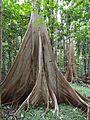 Sulawesi trsr ph07.jpg