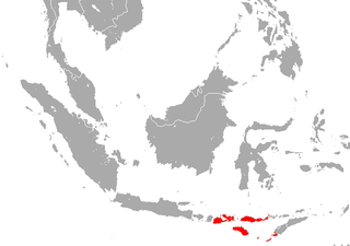 Sumba roundleaf bat species of mammal