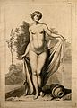 Superficial anatomy of the woman; anterior view. Engraving Wellcome V0008378.jpg