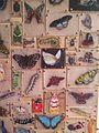 Surel'sPlaceShrinkyDinksButterflies.jpg