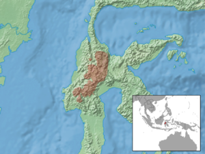 Sulawesi montane rat - Image: Taeromys hamatus distribution