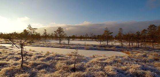 Talv Kõnnu Suursoos1.jpg