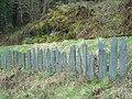 Talyllyn fencing - 2008-03-18.jpg