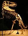 Tarbosaurus mount.jpg