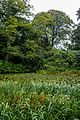 Tatton Park 2016 029.jpg