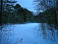 Texel - De Dennen - Paradijsweg - View NNE on Paradise - Paradijs in Winter.jpg