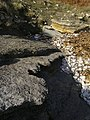 The Cinder Bed, Durlston Bay - geograph.org.uk - 1707796.jpg