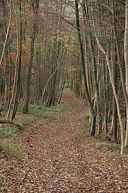 The Cotswold Way through Witcombe Wood - geograph.org.uk - 622269