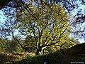 The Hermitage Dunkeld Scotland (11).jpg