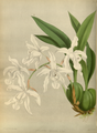 The Orchid Album-02-0021-0054.png
