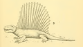 The Osteology of the Reptiles-247 vghuj vbnm jhkjhg.png