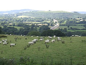 Carmarthenshire - A typical landscape in the Towy Valley