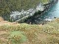 The Wick, Skomer Island - geograph.org.uk - 28961.jpg