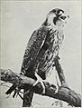 The bird, its form and function (1906) (14732613496).jpg