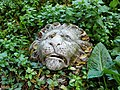 The death mask of a vegetarian lion (5231609530).jpg