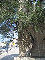 The old port of Jaffa (4158399208).jpg