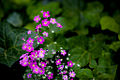 Tiny flowers (3071341138).jpg
