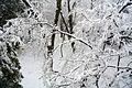 Tokyo snow 2013Jan14 - Flickr - odako1 (1).jpg