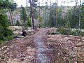 Top of Siiskukkula - panoramio.jpg