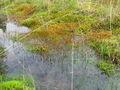 Transitie van water naar land in de Deelense Was.jpg