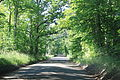 Tree-Lined Chubb Road Lyon Township Michigan.JPG