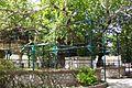 Tree of Hippocrates 2003.jpg