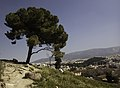 Tree over the city (33512624251).jpg