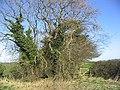 Trees and gate near Newtonbarns - geograph.org.uk - 327362.jpg