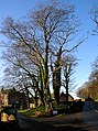 Trees at Brieryside - geograph.org.uk - 295388.jpg