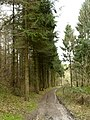 Trees in West Hill Plantation - geograph.org.uk - 722793.jpg