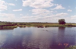 Kalininsky District, Tver Oblast - The Shosha River in Turginovo.