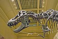 Tyrannosaurus Rex skeleton is on display in the Dinosaurs hall at the Smithsonian's National Museum of Natural History in Washington, D.C..jpg