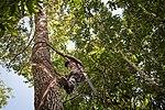 USAID Measuring Impact Conservation Enterprise Retrospective (Guatemala; Rainforest Alliance) (40304382921).jpg