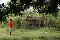 USAID Measuring Impact Conservation Enterprise Retrospective (Philippines; Nagkakaisang Tribu ng Palawan) (26420744518).jpg