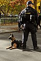 US Coast Guard Petty Officer 2nd Class Nicholas L. Heinen and his K-9 companion march in Veterans Day Parade 111113-G-QS739-001.jpg
